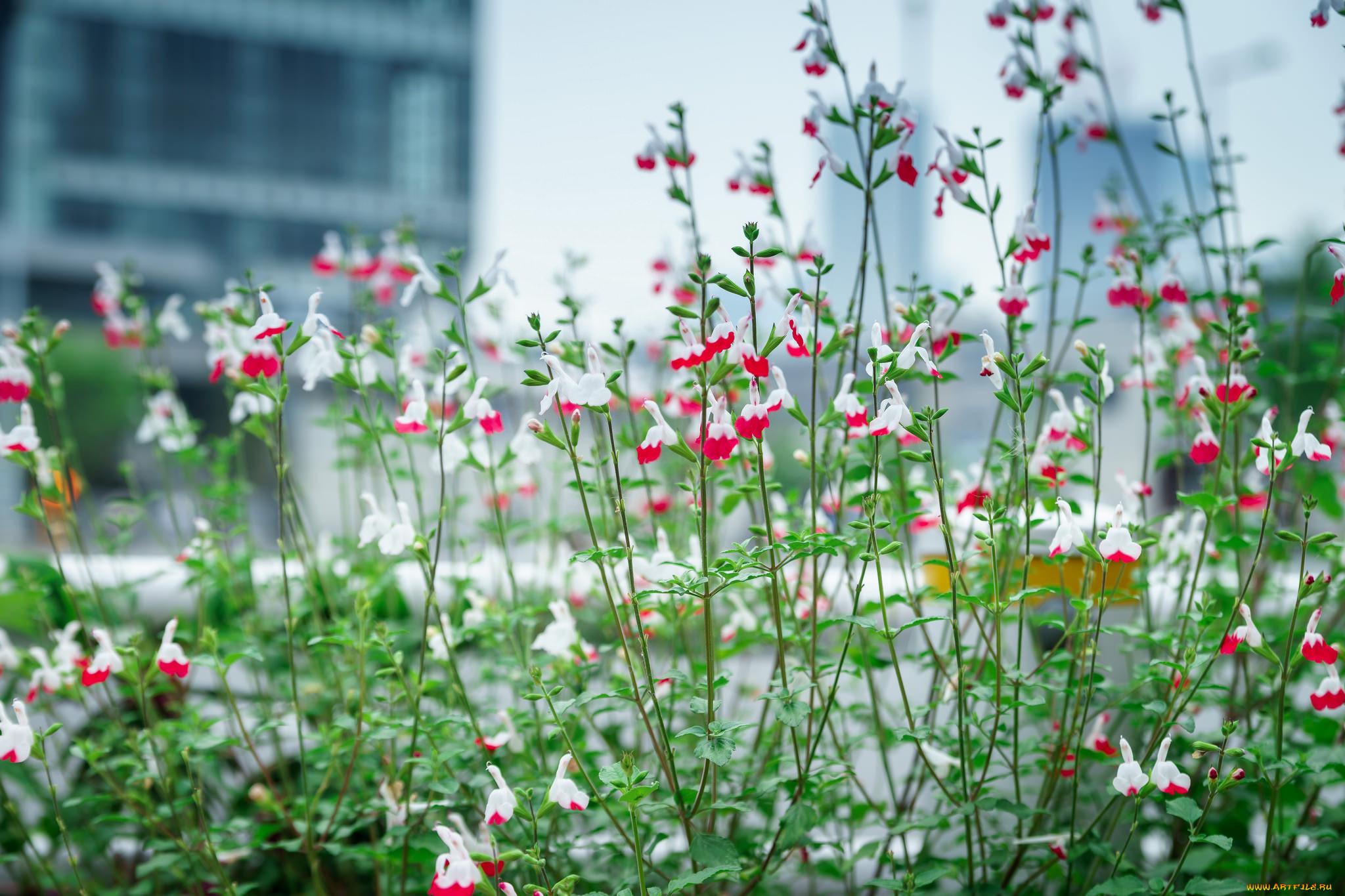 цветы, клумба, растения